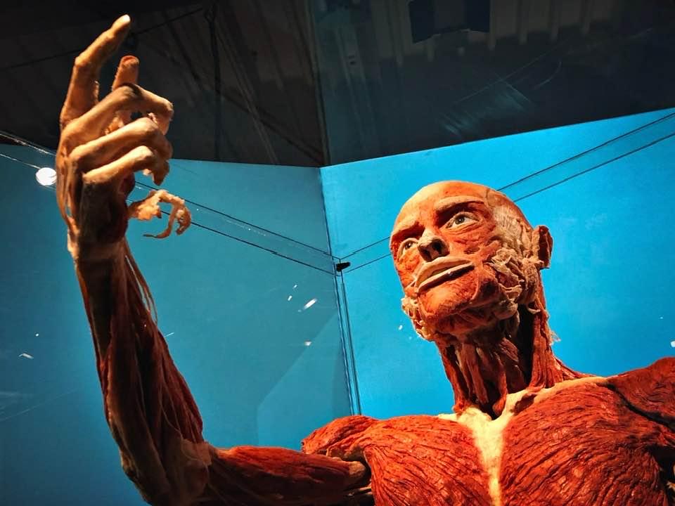 Body Worlds - Körperwelten Exhibition at Halle 662 Zürich