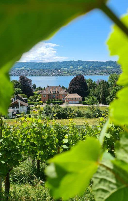 A Wine Trip From Hotel Schweizerhof To Landolt Vineyards in Zurich