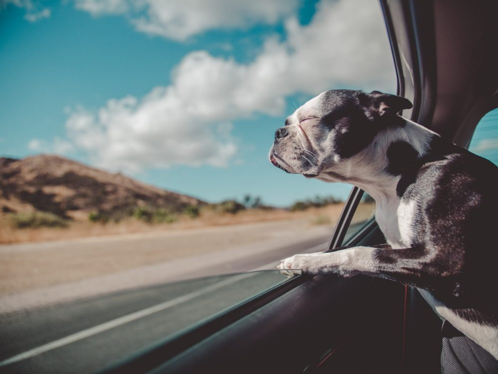 Travelling With Your Pet From Switzerland to the UK