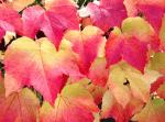 Autumn Leaves © NewInZurich.com