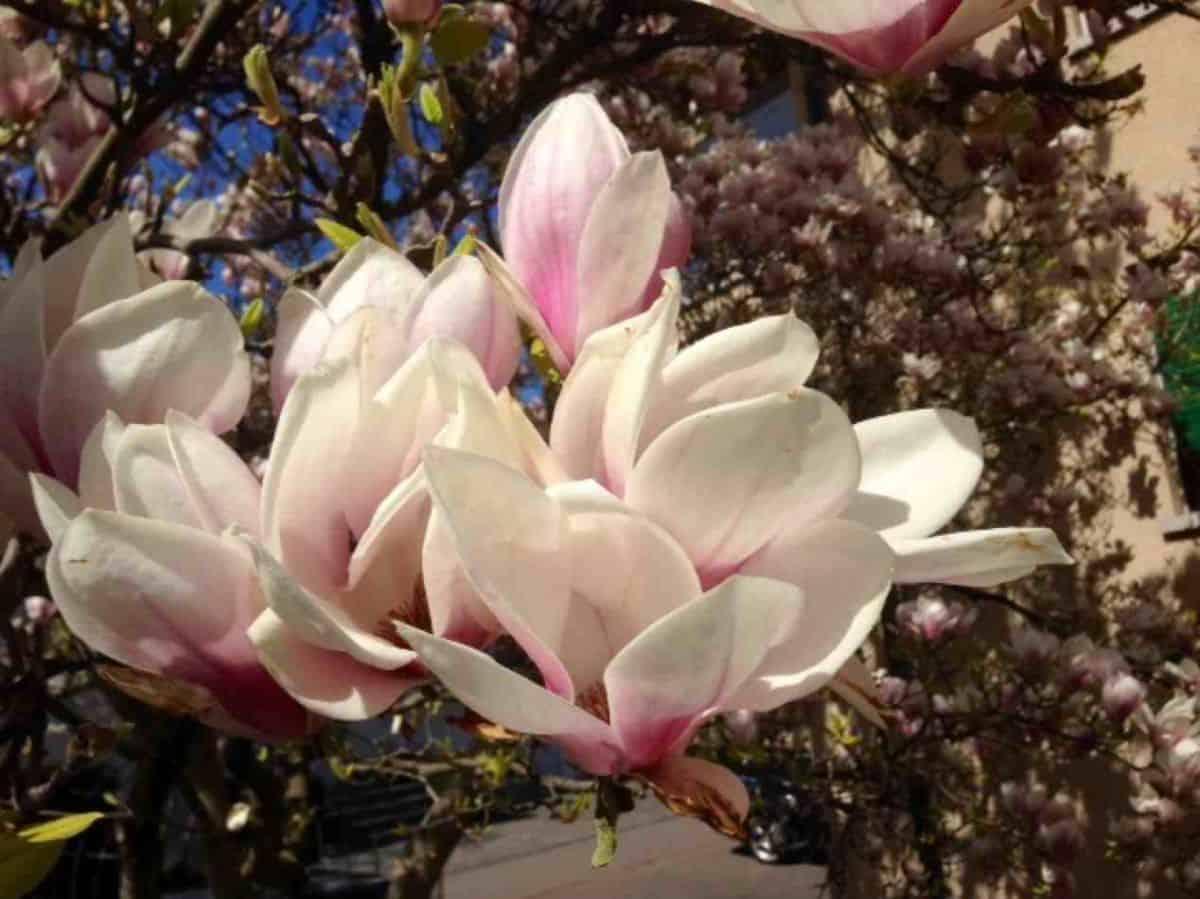 Springtime in Zurich